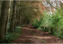 Woodland-spring-site